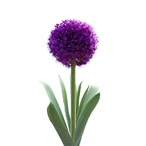 XINDUO Fleurs Sauvages en mélange Graines,Allium Quatre Saisons Jardin Fleurs Plante Verte graines de fleurs-100g,Graines De Printemps Vivaces