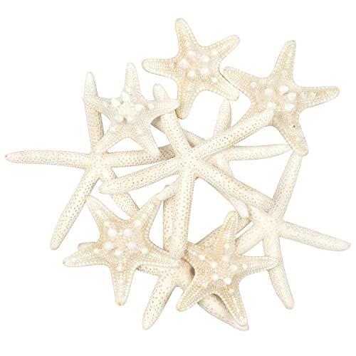 Yixuan 10PCS Estrellas de mar Estrella de mar Natural Estrella de mar Decoracion Molde Estrella mar decoracion de Bodas/Fiesta tematica en la Playa/Decoraciones para el hogar/Bricolaje