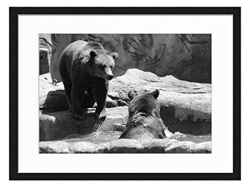 Wood Framed Canvas Artwork Home Decore Wall Art (Black White 20x14 inch) - Brown Bears Bears Exhibit Zoo Wild Bear Brown