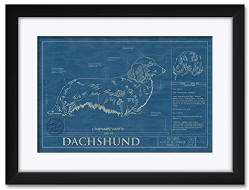 Dachshund- LONGHAIRED Professionally Framed & Matted Hand-Drawn Dog Blueprint by Robert Redding. Print Size: 13' x 19' Framed Art Size: 20' x 26'