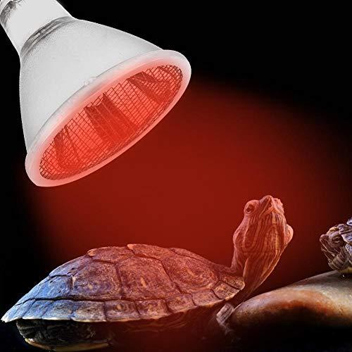 xianshi Carnevale di Natale Lampada a Cupola per Rettile, Luce di Riscaldamento a infrarossi per rettili Tartaruga, Lampada a Cupola a Raggi infrarossi da 220 V per rettili(30W)
