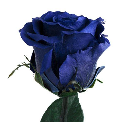 Blaue Rose konserviert haltbar 3 Jahre ewige Rose mit Stiel die eine Ewigkeit blüht ROSEMARIE SCHULZ® (Blau)