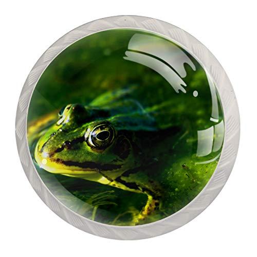 KAMEARI Round Cabinet Knob Frog Swimming in Green Seaweed Set of 4