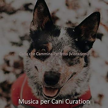 Cane che Cammina Perfetto (Vibrazioni)