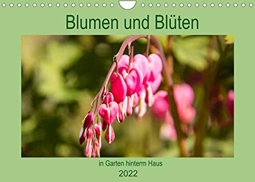 Blumen und Blüten im Garten hint...