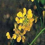 Santiveri Bach Mustard-Mostaza - 300 g