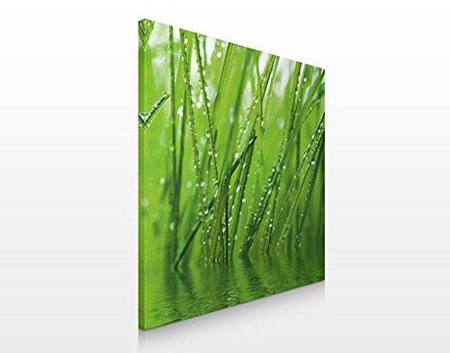 Apalis Leinwandbild No.53 Morgentau 70x70cm Pflanzen Tropfen Tau Blätter Gras, Größe:70cm x 70cm