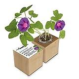 Eco-Woody | Regalo ecologico e sostenibile | Cubo di legno magnetico con semi di Ipomea | Kit per la coltivazione facile di piante in casa
