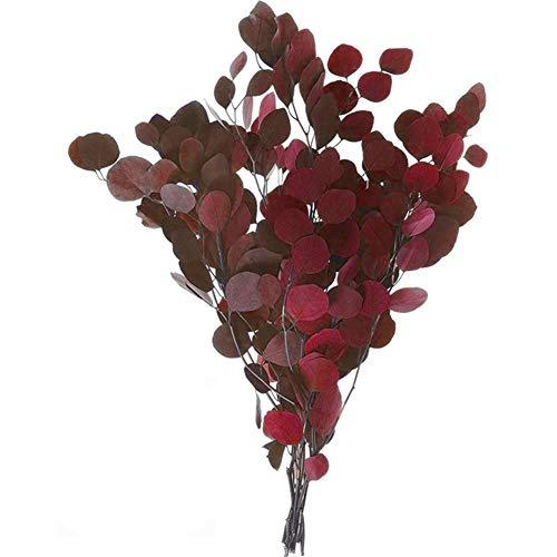 PTVwire Echte Eukalyptus-getrocknete Blumen,getrocknete Eukalyptusblüten, unsterblicher Eukalyptus, kann für Hochzeit, Garten, Haus, Büro, Außen- und Innendekoration verwendet werden rot