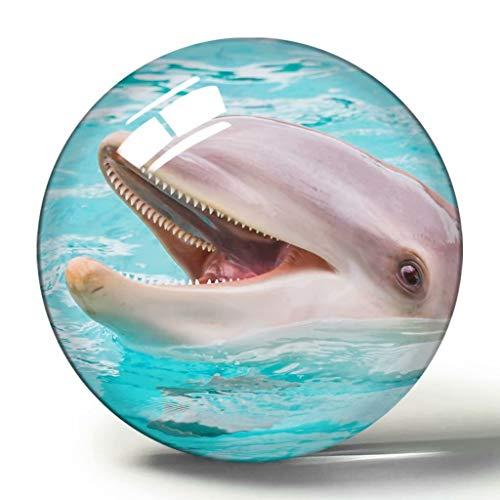 USA Amerika Clearwater Marine Aquarium 3D Kühlschrank Magnet Souvenir Sammlung Reisegeschenk Kreis Kristall Kühlschrank Magnete