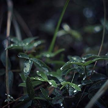 Peaceful Rain Sounds with Binaural Sounds | Ultimate Deep Sleep