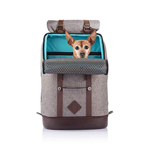 Kurgo Dog Carrier Backpack for Small Pets - Dogs & Cats | TSA Airline Approved | Cat | Hiking or Travel | Waterproof Bottom | G-Train | K9 Ruck Sack | Red | Grey (Heather Charcoal Grey) (ZCR30-17135)
