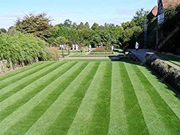500 Stücke Seltene Grüne Rasen Grassamen Seltene Rasensamen Golf Special Grade Immergrüne Rasensamen Fußballplätze Villa Diy Hausgarten