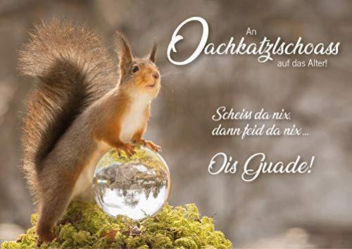 3 Stück Witzige Doppelkarte mit Kuvert, Geburtstagskarte, Eichhörnchen, bayrisch: