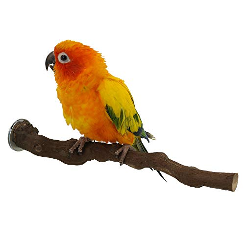Cockatiel Lovebird Conure African Grey Natural Bird Cage Toys Supplies for Small Medium Birds FinYii Parrot Perch