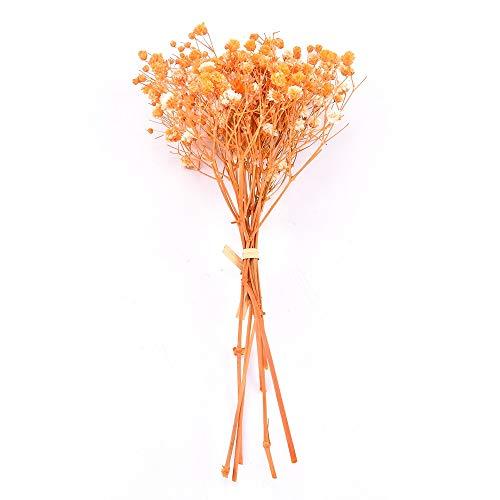 TZZD Real Happy Flower Kleine natürliche getrocknete Blumen Blumenstrauß Trockene Blumen Press dekorative Fotografie Foto-Hintergrund-Dekor (Farbe : JF304)