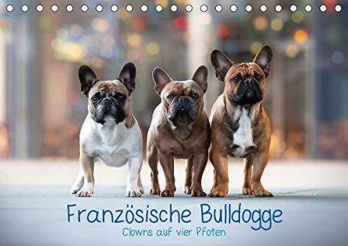 Französische Bulldogge - Clowns auf vier Pfoten (Tischkalender 2021 DIN A5 quer)