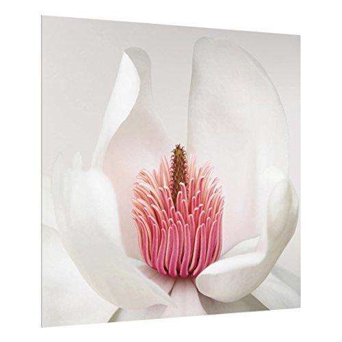 Bilderwelten Panel antisalpicaduras de Cristal - Magnolia en Rosa - Cuadrado 1:1, Panel antisalpicaduras Panel de Vidrio para Cocina Panel Protector contra Salpicaduras, Tamaño: 59cm x 60cm
