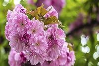 ChuYuszb 大人のためのパズル1000個のDiy咲く花の写真を家の装飾のために素敵なギフト