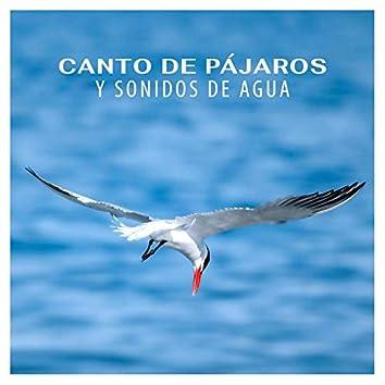 Canto de pájaros y sonidos de agua - Música instrumental relajante con sonidos de la naturaleza para calmar la mente, relajacion profunda, meditacion y práctica de yoga, reiki, musicoterapia