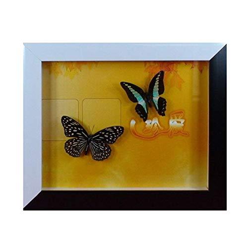 SHUAI Butterfly Crafts (10-Zoll-Schwarzweiß-Karton) Butterfly Specimen Gift Butterfly Frame Specimen Crafts,3