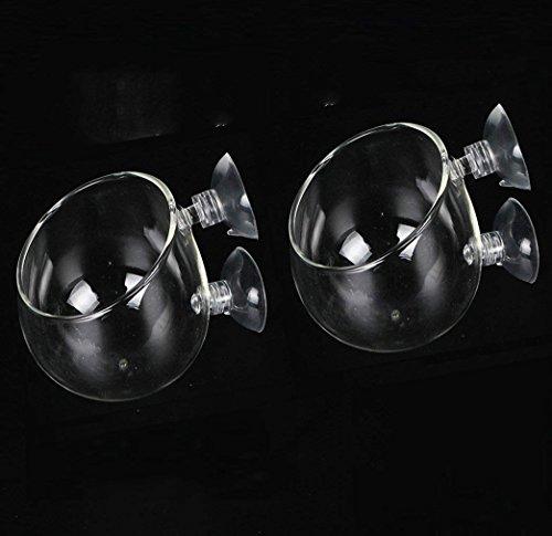 Bhbuy Paquete de 2 mini macetas, vaso de cristal para acuarios, con ventosas, para decoración de acuario