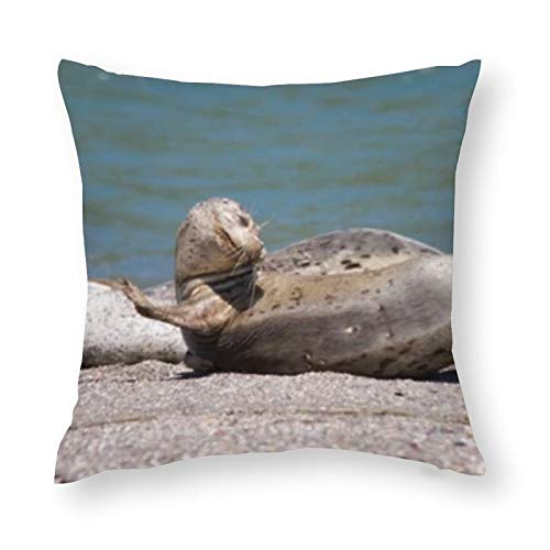 Seals Goat Rock Beach Sonoma Unique Throw Pillow Cover Creative Cushions Case Covers with Zipper Home Decorative Print Pillowcase for Sofa Couch(18'×18')