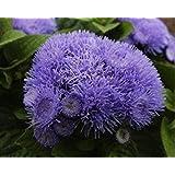 。花の種子:雨シーズン工場屋外の種子(9つのパケット)庭の植物の種子用フロス花の花の種子