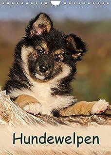 Hundewelpen (Wandkalender 2022 DIN A4 hoch): Niedliche Welpen zum Liebhaben (Monatskalender, 14 Seiten )