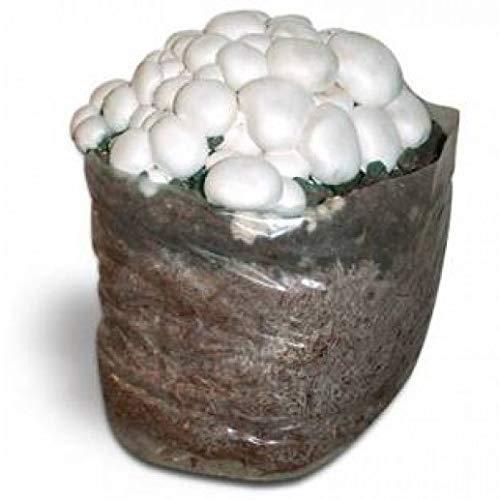 Kit Coltivazione Funghi Prataiolo CHAMPIGNON Bianco con...