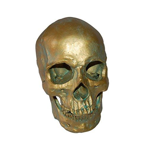 Modèle 1: 1 Crâne Humain en Résine Enseignement Anatomique Décoration - Bronze Antique