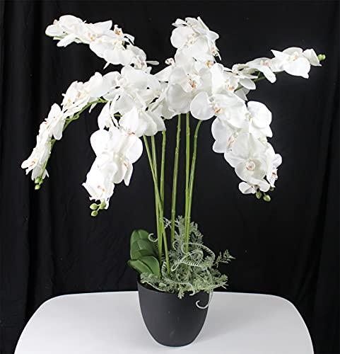 Arnusa Orchidee 110 cm