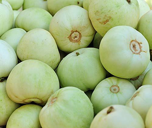 Bobby-Seeds Melonensamen Sakata Sweet Melone Portion