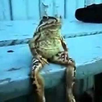 froge