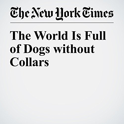The World Is Full of Dogs without Collars audiobook cover art