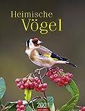 Heimische Vögel - Kalender 2021 - Weingarten-Verlag - Wandkalender mit bezaubernden Aufnahmen und Platz zum Eintragen - 29,8 cm x 38,8 cm