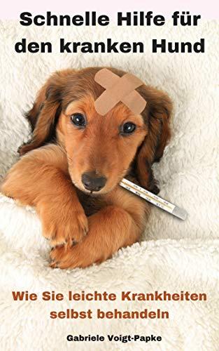 Schnelle Hilfe für den kranken Hund: Wie Sie leichte Krankheiten selbst behandeln
