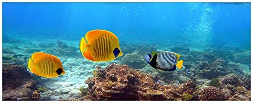 Wallario Acrylglasbild Bunte Fische im Meer - 50 x 125 cm in Premium-Qualität: Brillante Farben, freischwebende Optik