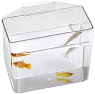 Best fish container price Reviews