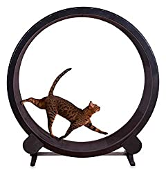 Phasuk Cat Exercise Wheel - Indoor