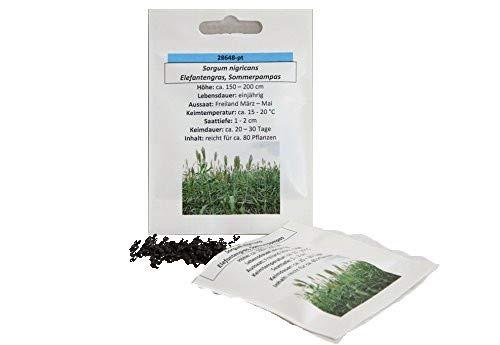 Elefantengras Sommerpampas sehr schnell wachsendes Ziergras Saatgut Samen reicht für ca. 80 Pflanzen