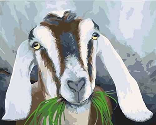 wnuia Pintura Digital por numeros Oveja Animal Comiendo Hierba 40X50CM (Enmarcado) niños Principiante Pintura al óleo por números para Adultos para Regalo de Arte