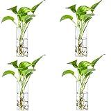 Jarrón de cristal para colgar en la pared, terrarios, macetas, macetas, burbujas de interior, jarrón de cristal para plantas de aire, decoración de pared, 4 piezas (jarrón cuadrado)