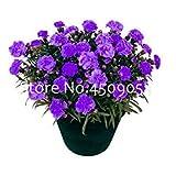 200pcsのカーネーション植物ファミリーバルコニーフォーシーズンズ鉢植え多年生の花の植物のホームガーデンの植栽のために:8