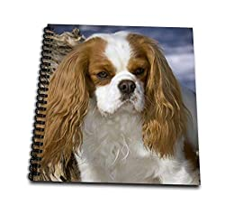Danita Delimont – 犬 – Purebred Cavalier King Charles Spaniel Dog – na02 pwo0030 – PiperAnneウースター – Drawing Book 4 x 4