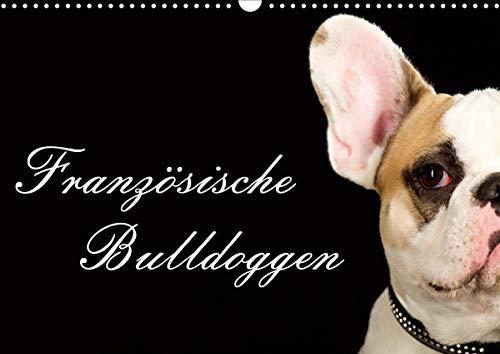 Französische Bulldoggen (Wandkalender 2021 DIN A3 quer)