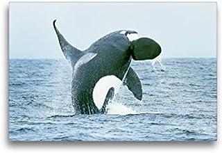 SCHLEICH Wild Life Oceano 2018 14806-14809 balenottera azzurra delfini e squalo bianco Orka
