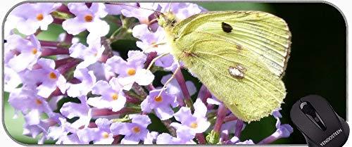 Mauspad Extended XXL, Schmetterlingsgrün Insekt Natur Tier Wing Office Mauspad