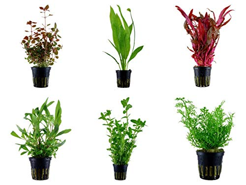 Tropica Hintergrund Set mit 6 Topf Pflanzen Aquariumpflanzenset Nr.24 Wasserpflanzen Aquarium Aquariumpflanzen