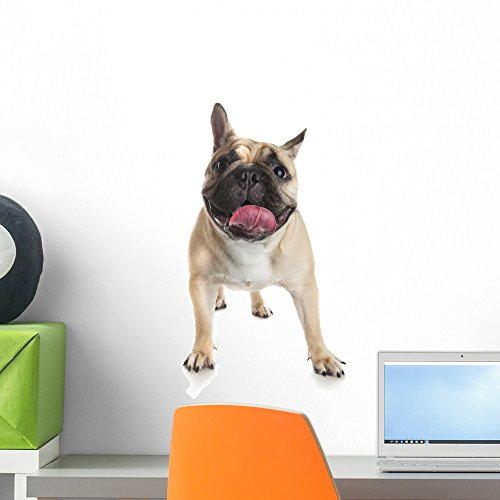 Wallmonkeys French Bulldog White Wall Decal Peel and Stick Graphic (18 in H x 13 in W) WM359393